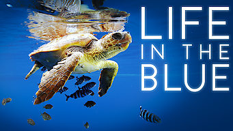Life in the Blue (2016)