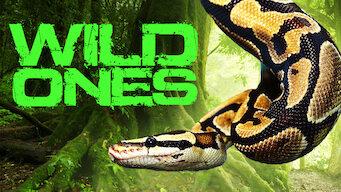 Wild Ones (2016)