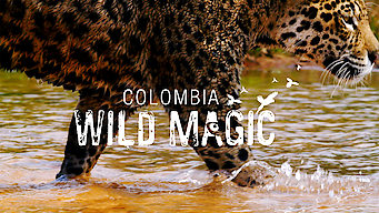 Colombia: Wild Magic (2015)