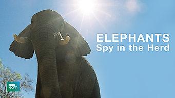 Elephants: Spy in the Herd (2003)