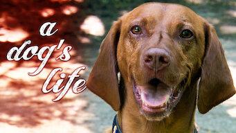 A Dog's Life (2013)