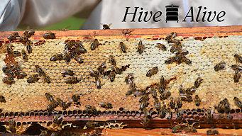 Hive Alive (2014)
